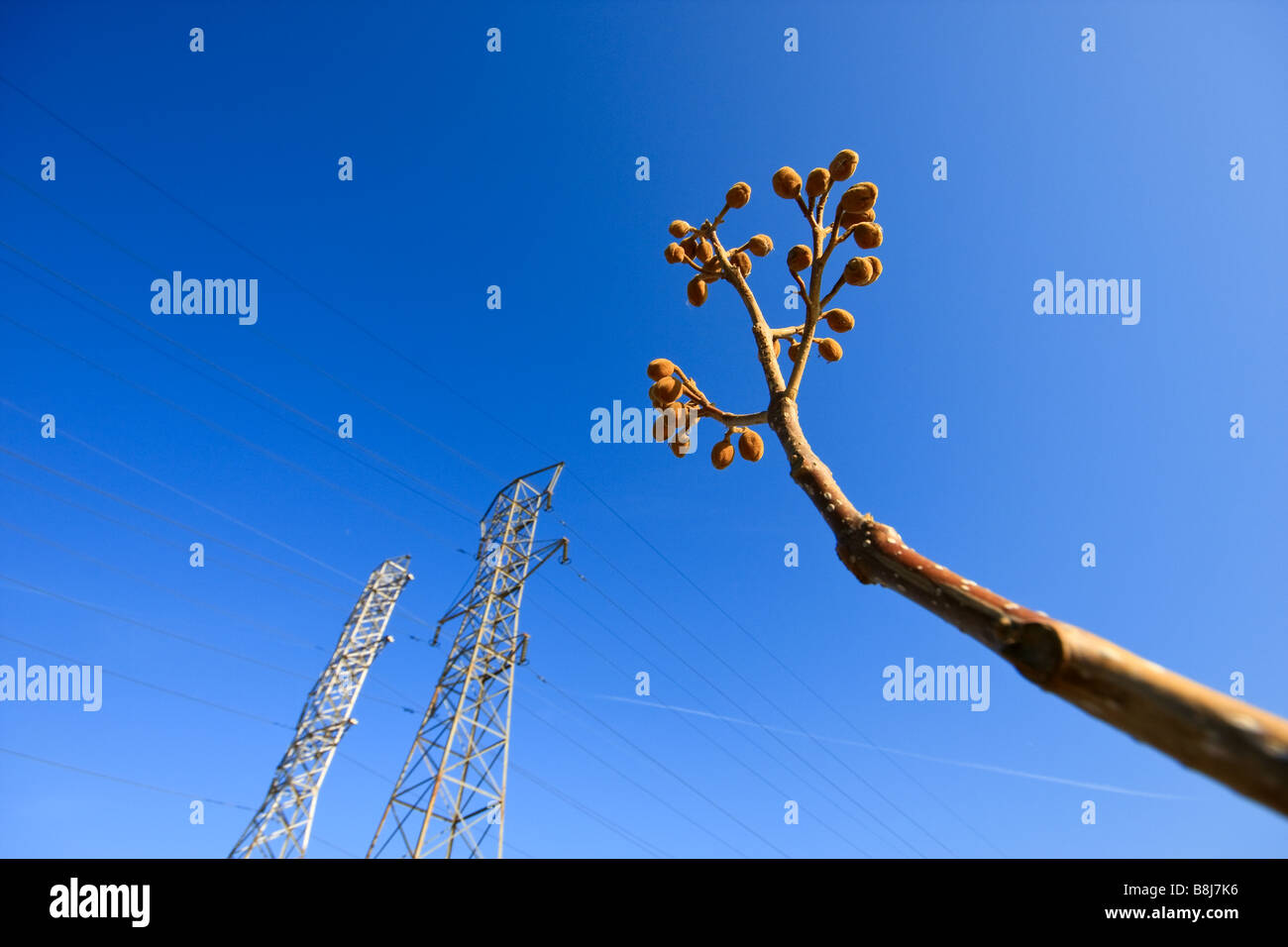 electric poles in the distance Stock Photo: 22528778 - Alamy