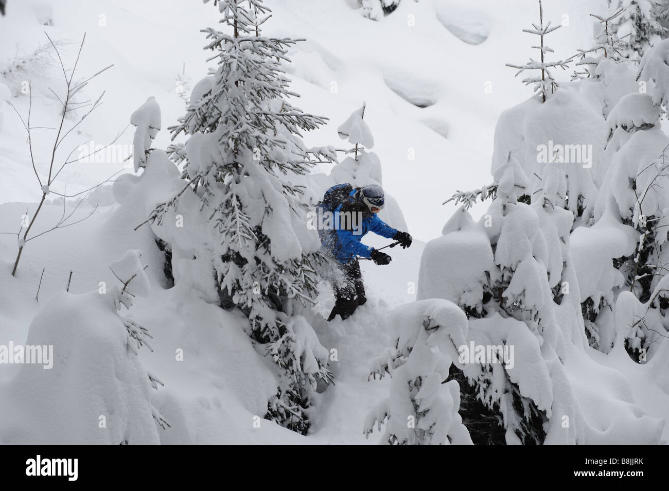 In between snow covered trees - Stock Image