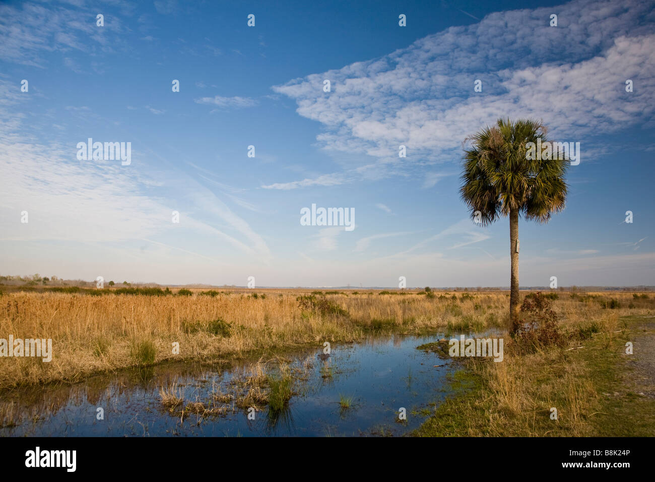 Paynes Prairie Preserve State Park in Micanopy near Gainesville Florida - Stock Image