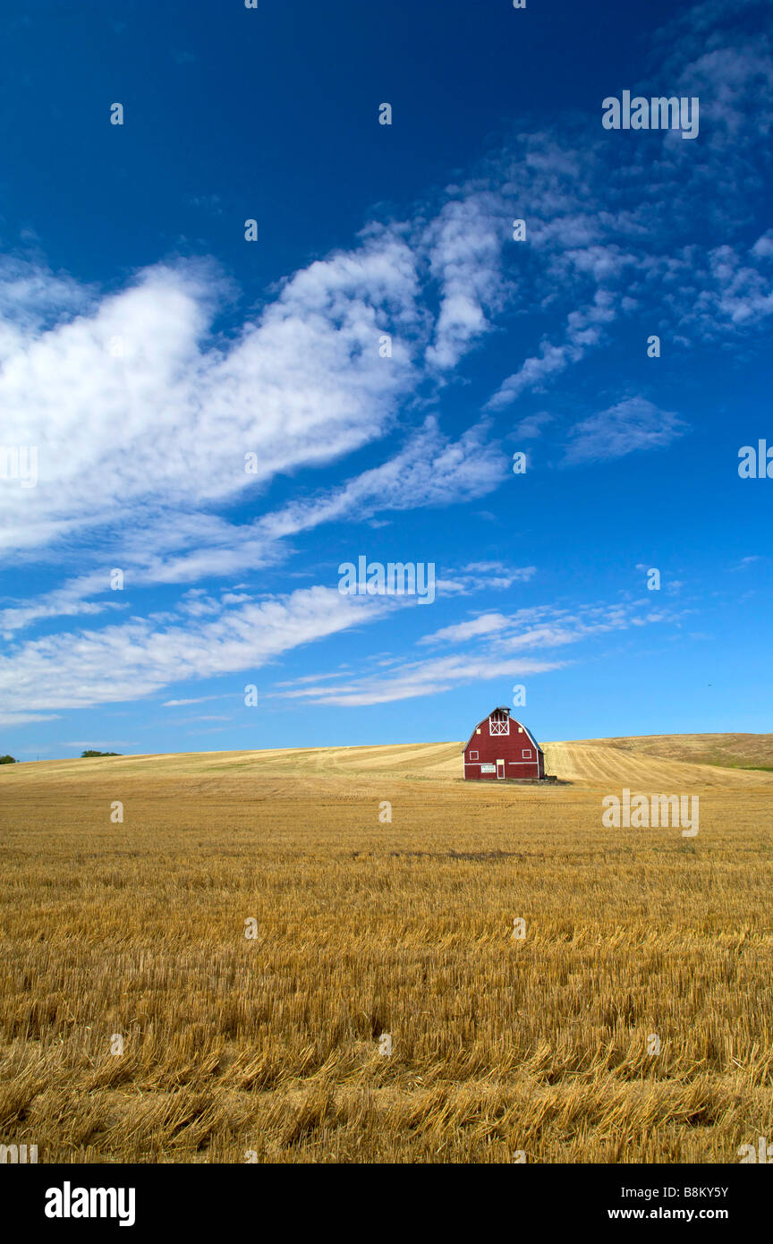 Wheat being harvested int he rolling farm country of the Palouse area of eastern Washington state - Stock Image