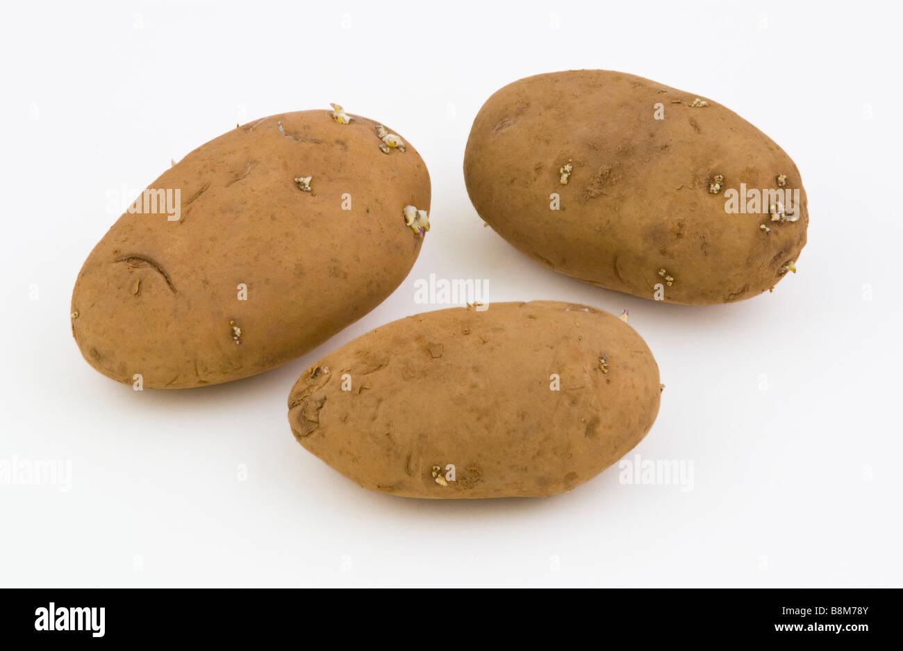 HOME GUARD 1st early seed potatoes - Stock Image