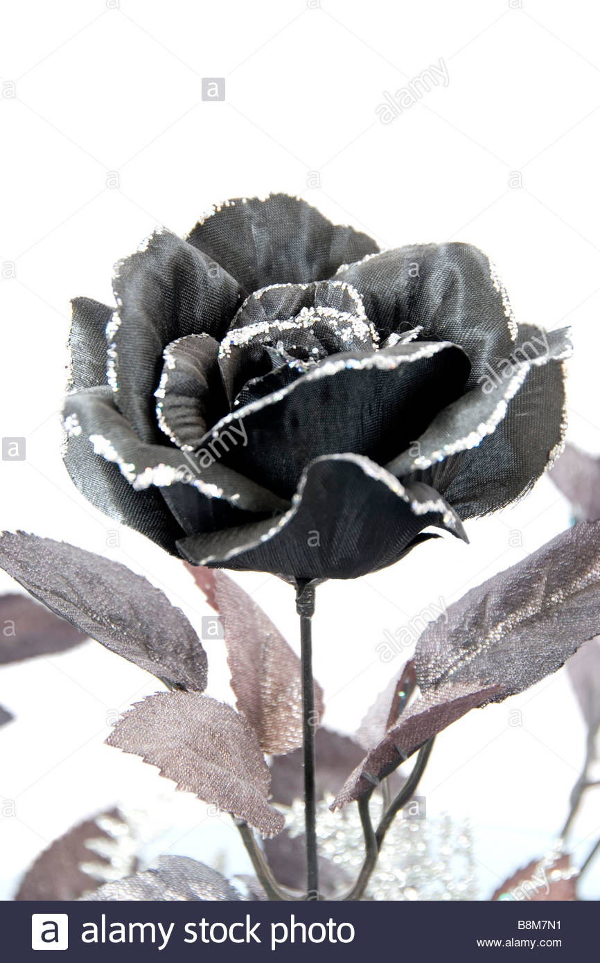 Black And Silver Rose On White Background