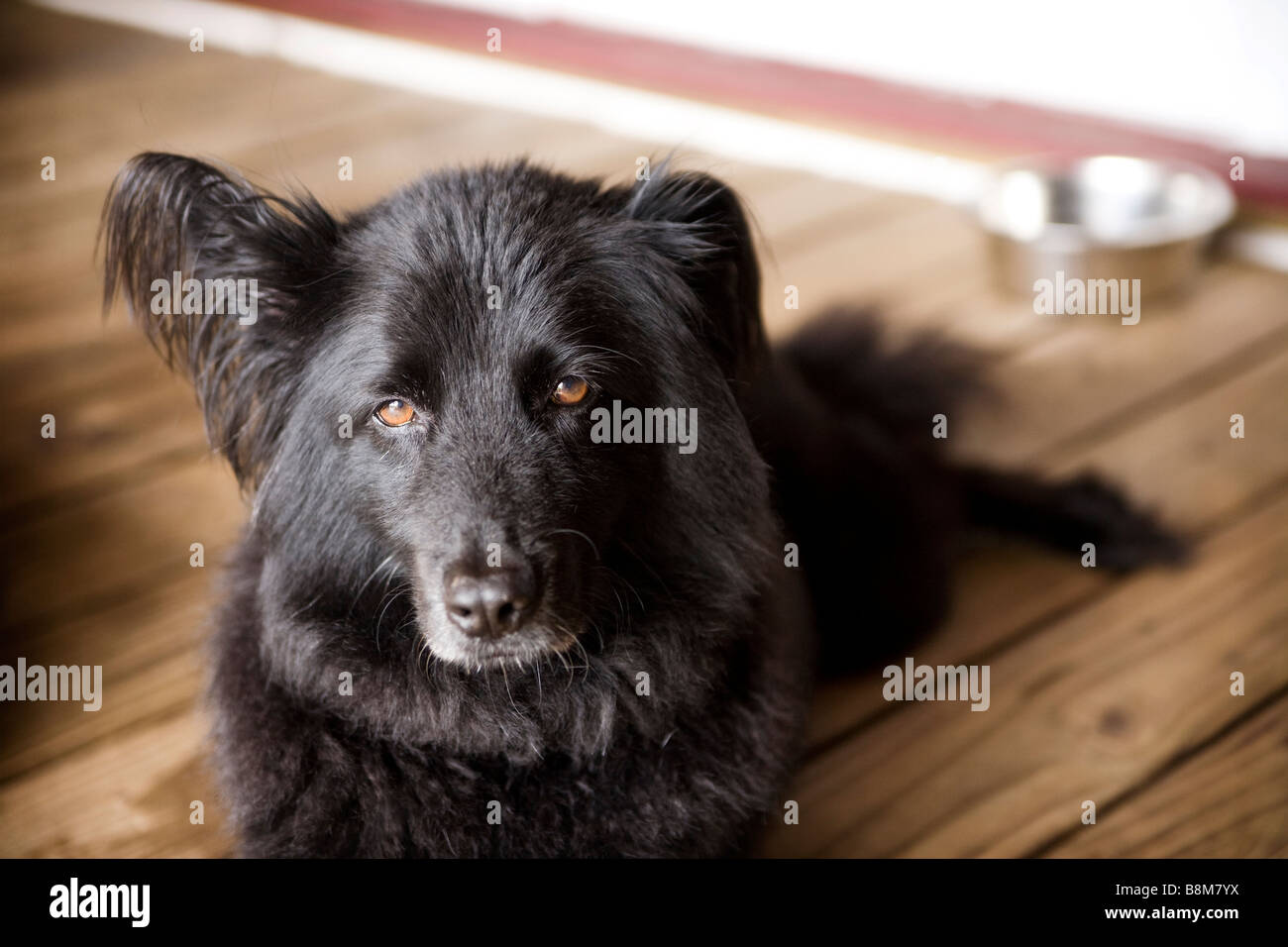 dog sitting outside Stock Photo