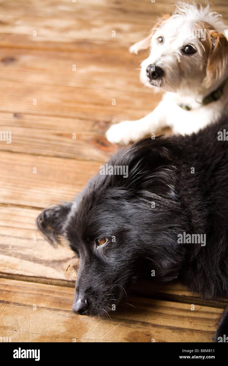 dogs lying on matt outdoors Stock Photo