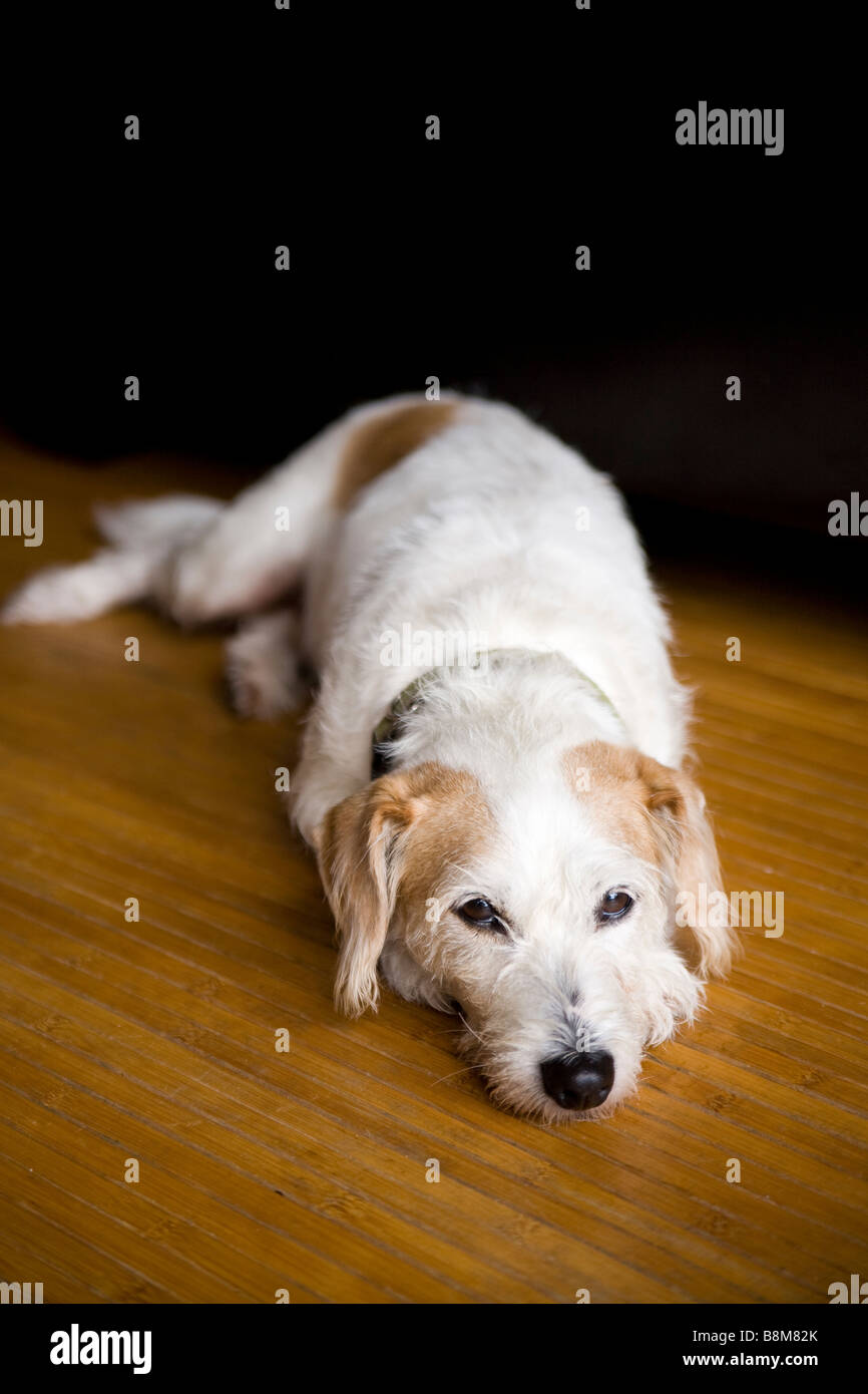 dog lying on matt outdoors - Stock Image
