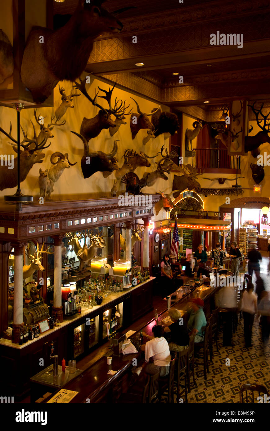 Buckhorn Saloon walnut 1890s bar above overview San Antonio Texas tx tourists at bar stuffed animal heads on wall - Stock Image