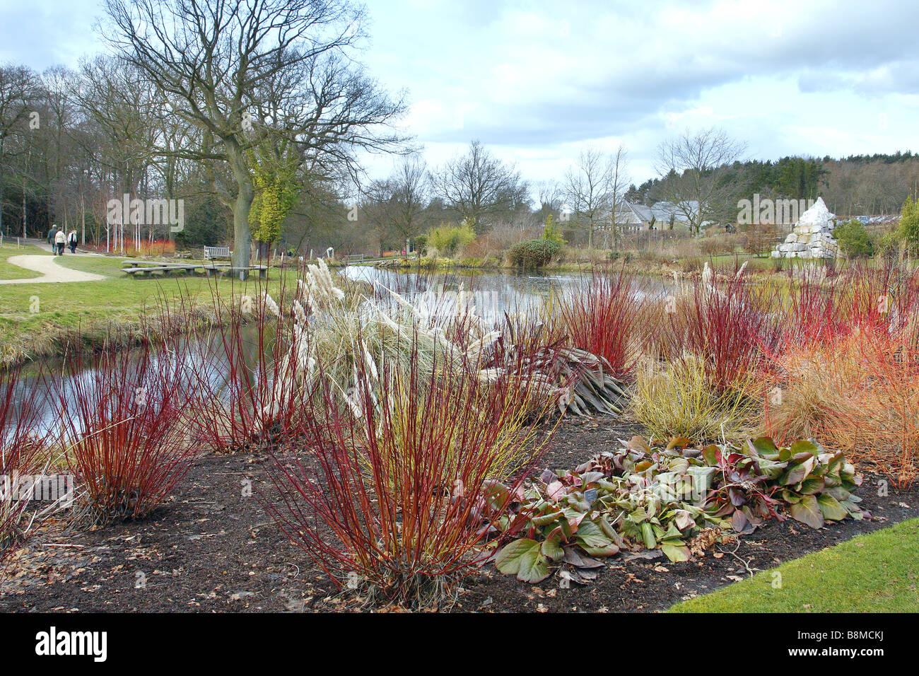 WATERSIDE PLANTINGS FOR WINTER INTEREST AT RHS HARLOW CARR - Stock Image