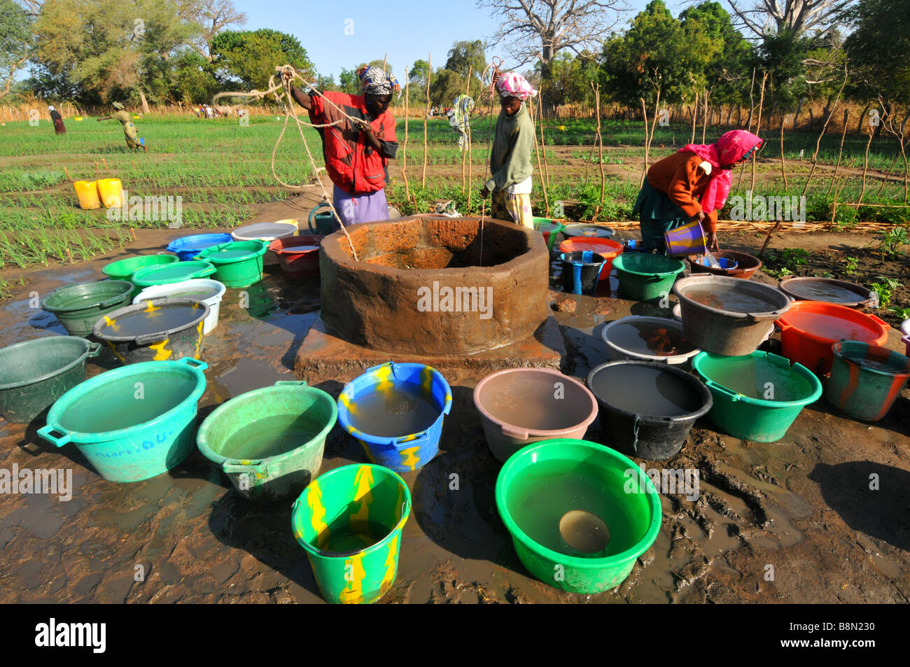 How to collect water 81
