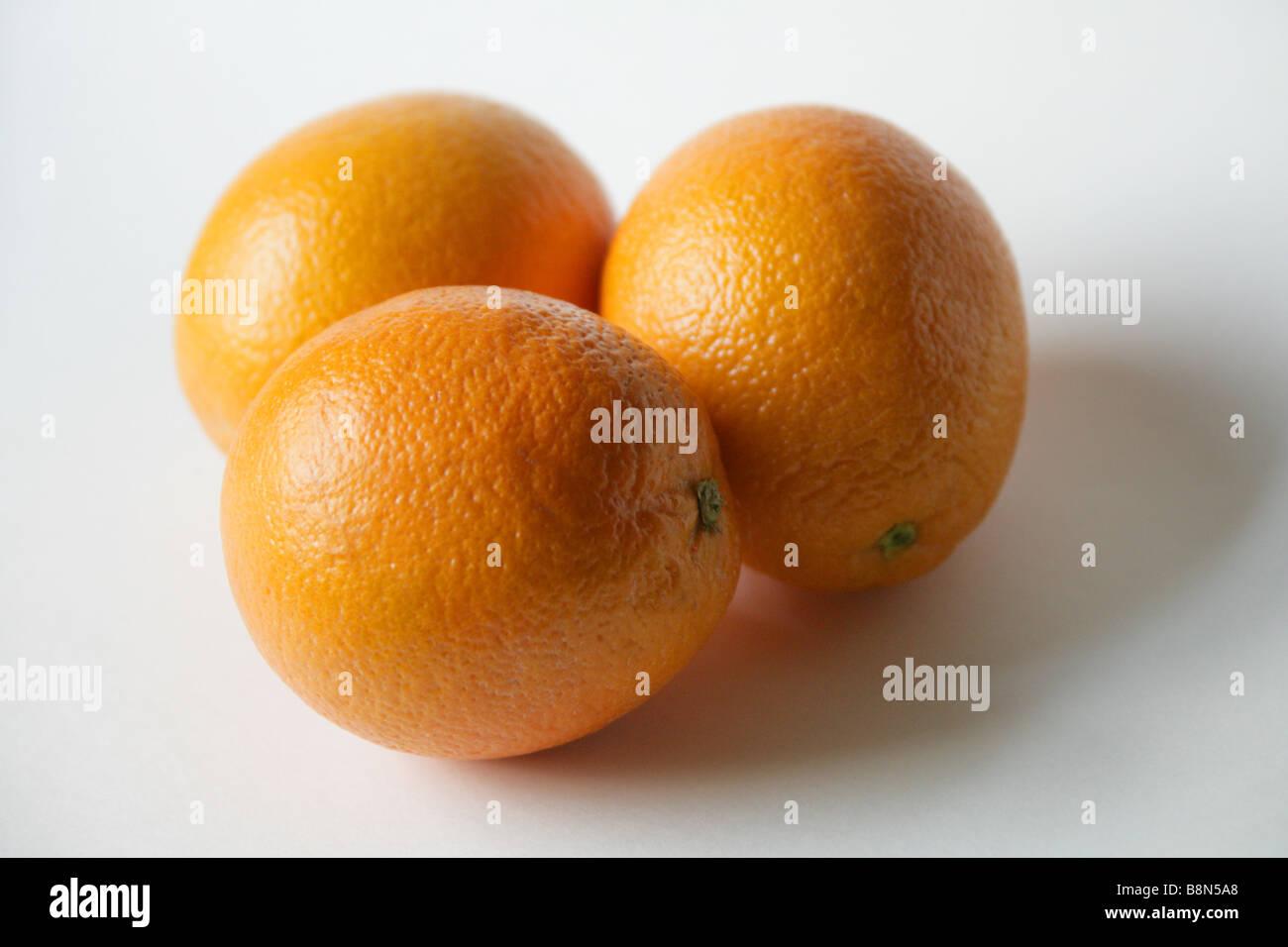 Oranges, Citrus sinensis - Stock Image