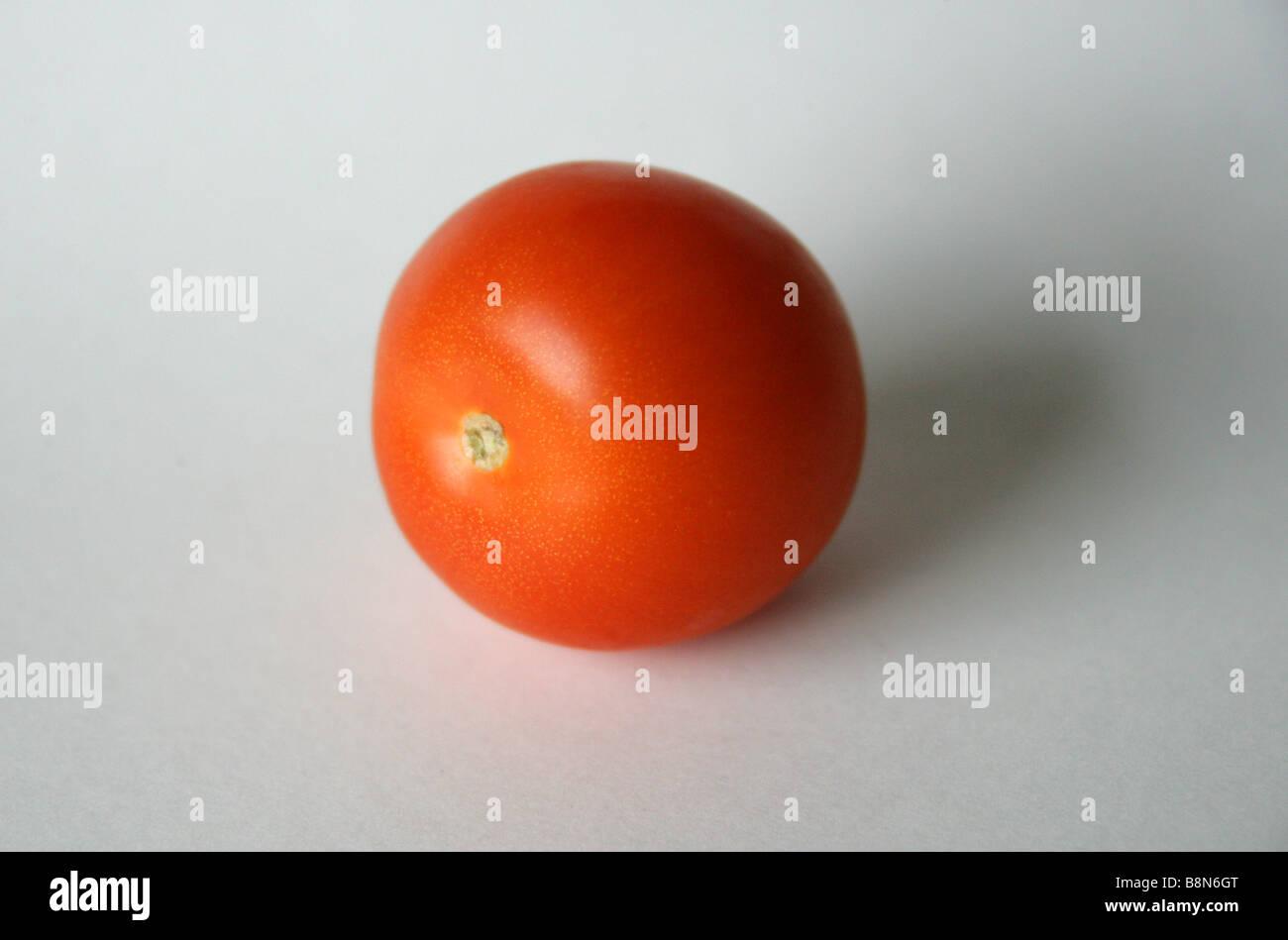 Tomato, Solanum lycopersicum syn Lycopersicon lycopersicum - Stock Image