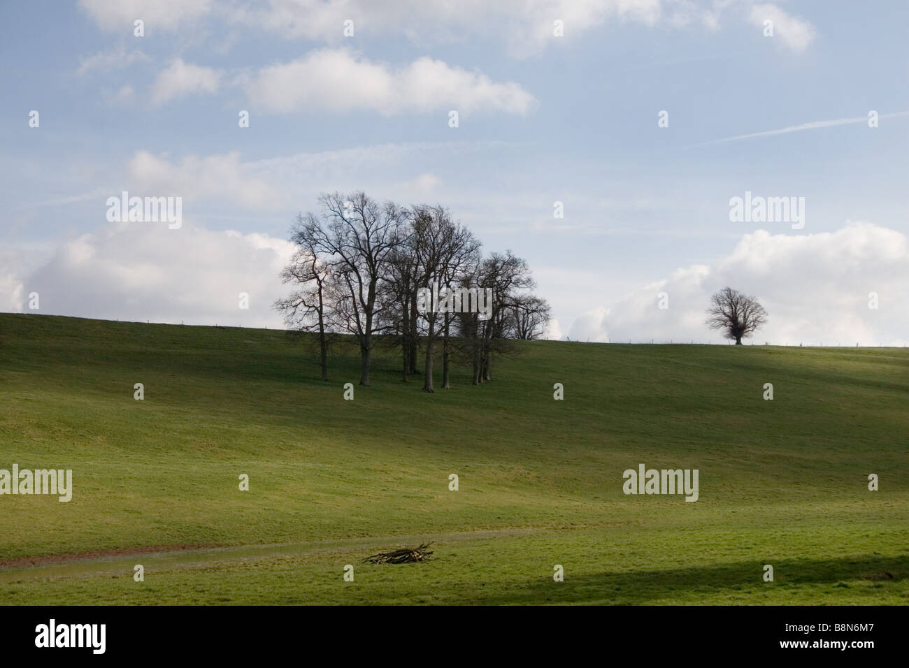 Pastureland with stand of beech trees on a sunny spring day: Somerset, England, UK - Stock Image