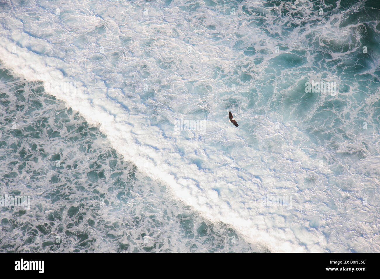 Aerial view of fish eagle flying over coastal breakers - Stock Image