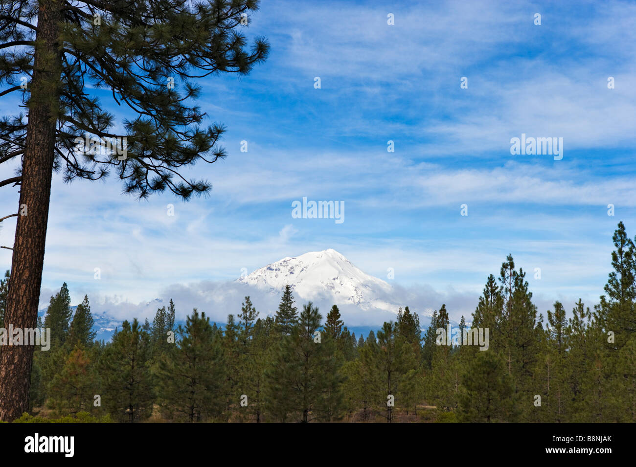 Mount Shasta from SR 89 (CA), Northern California, USA - Stock Image