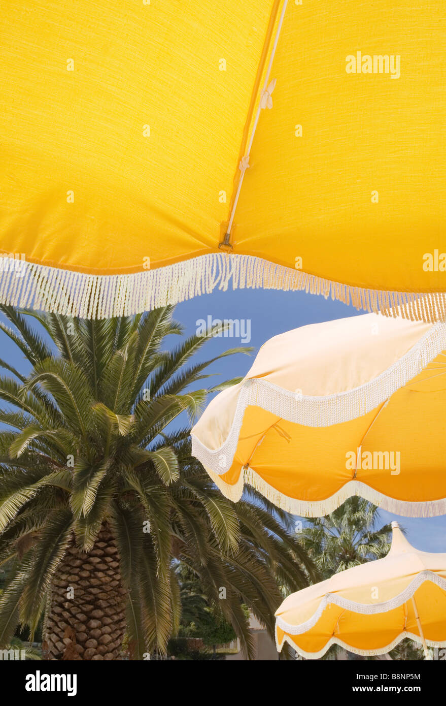 Looking upwards at yellow beach umbrellas with blue sky and palm tree behind. - Stock Image