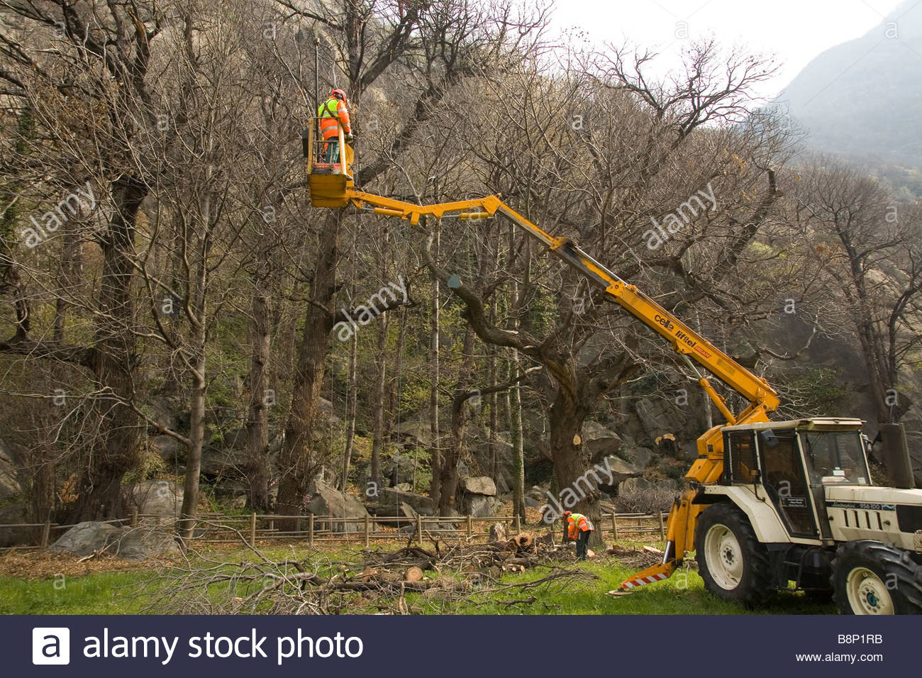 Europe Italy Valle D Aosta Arnad Chestnut Tree Squad Of The