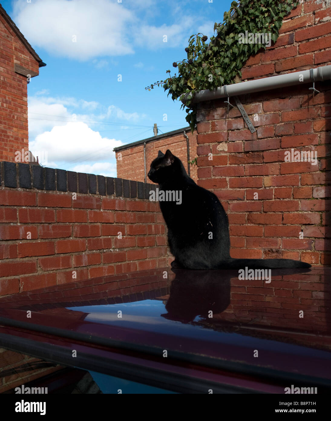 A black tomcat sitting on a car roof - Stock Image