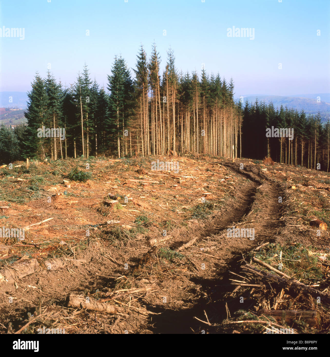 Forestry site after trees have been cleared in Carmarthenshire Wales UK Stock Photo