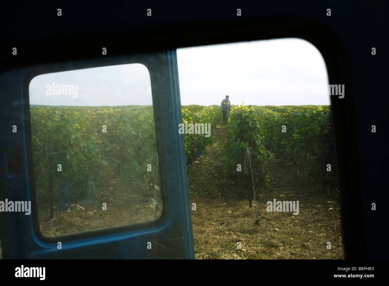 France, Champagne-Ardenne, Aube, vineyard viewed through truck window - Stock Image