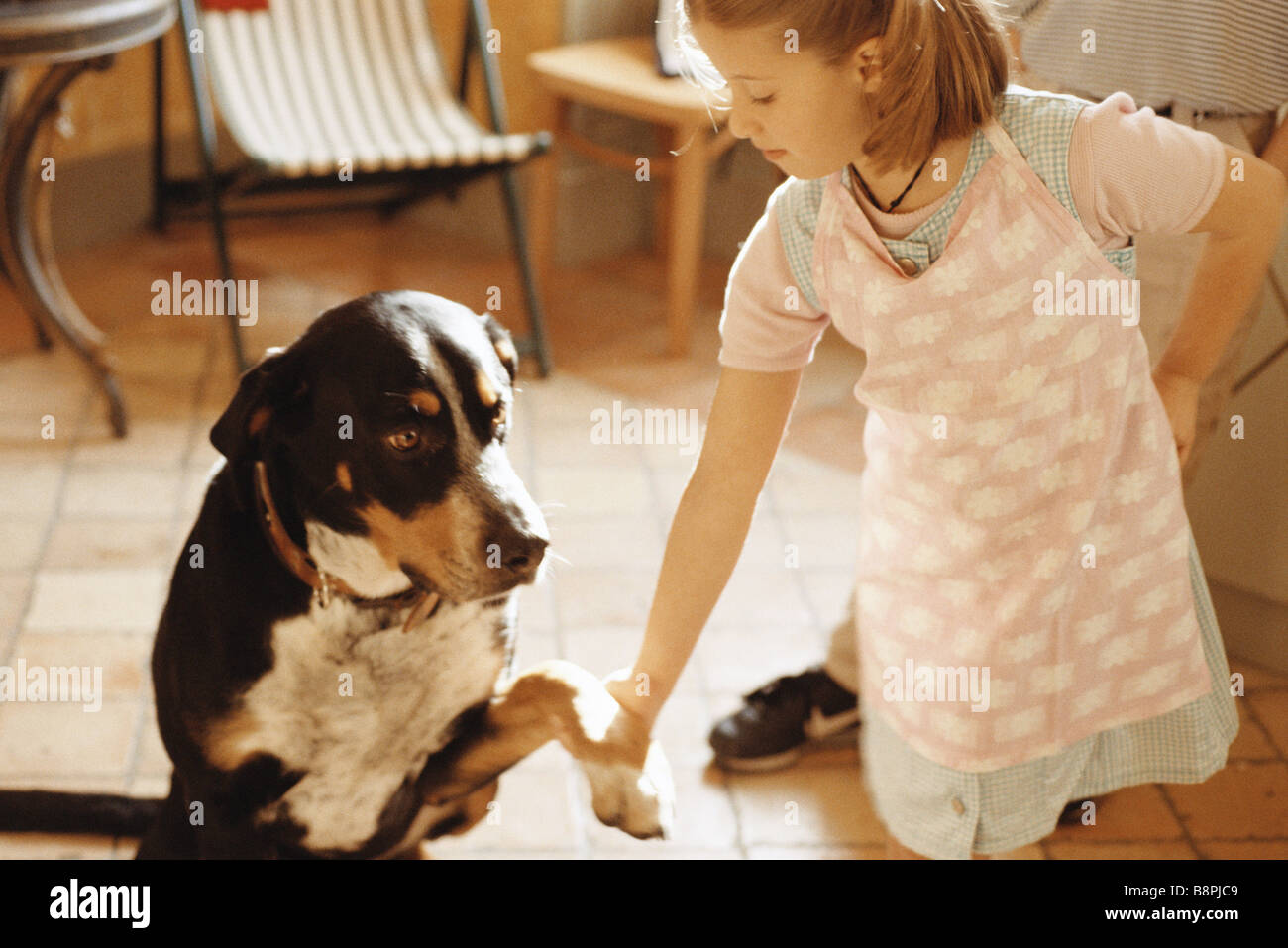 Girl shaking dog's paw - Stock Image