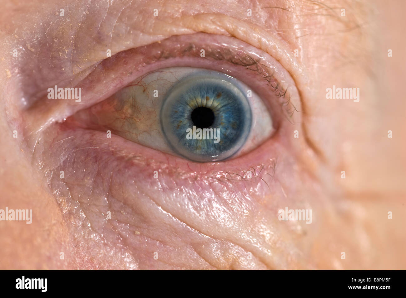 Close up of old ladies eye - Stock Image