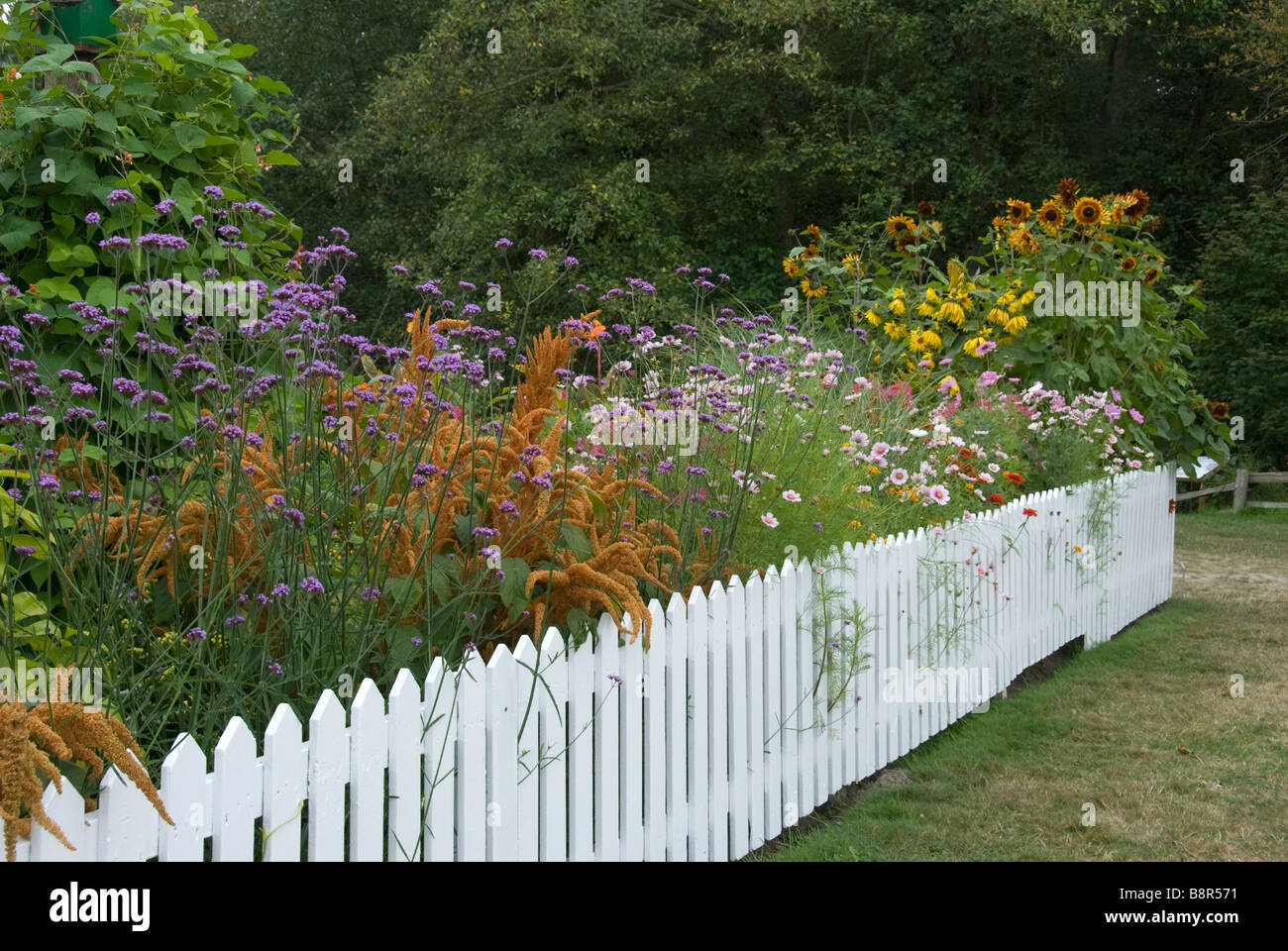 Flowers Along Fence High Resolution Stock Photography And Images Alamy