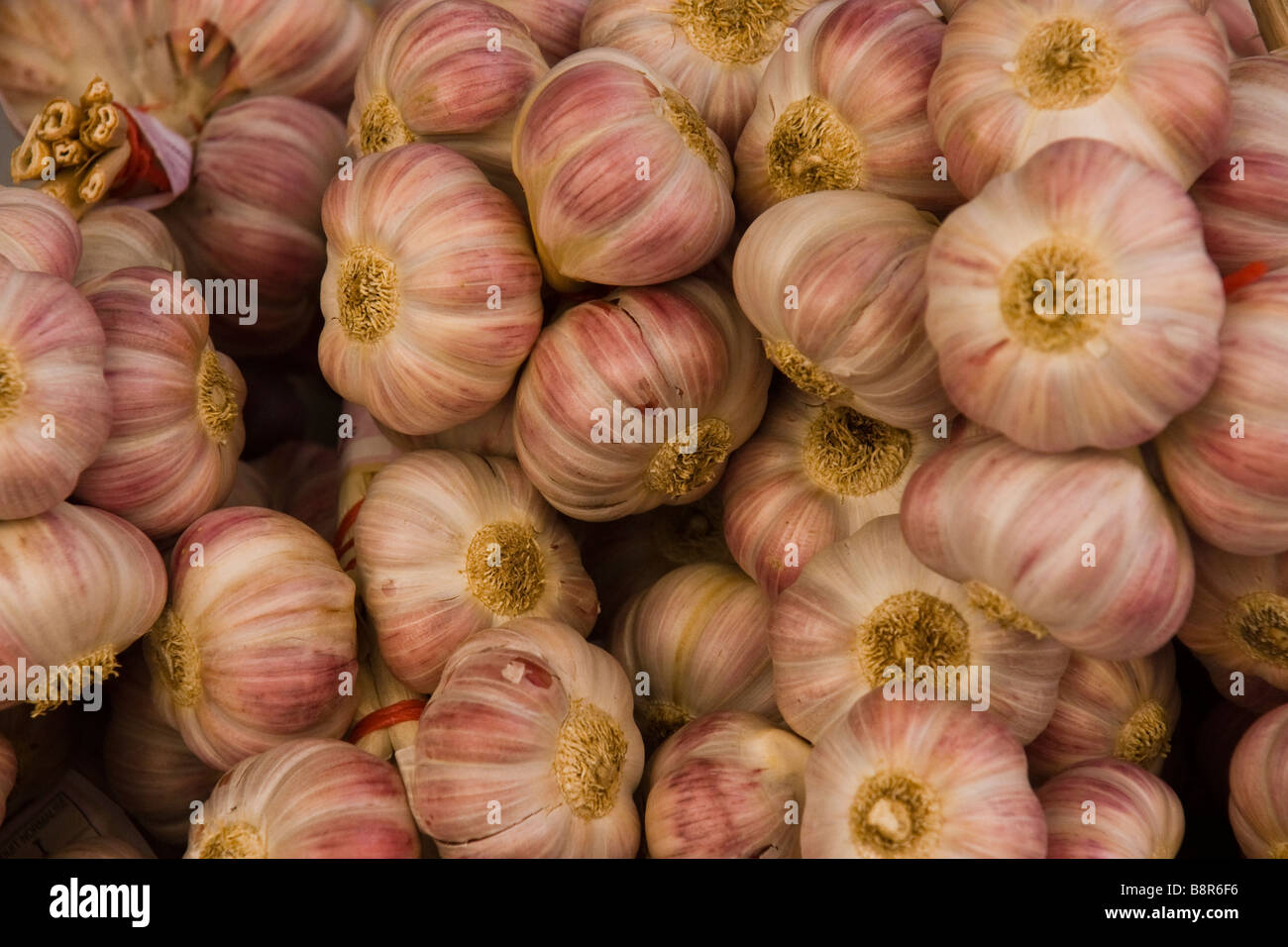 Garlic on sale in France - Stock Image