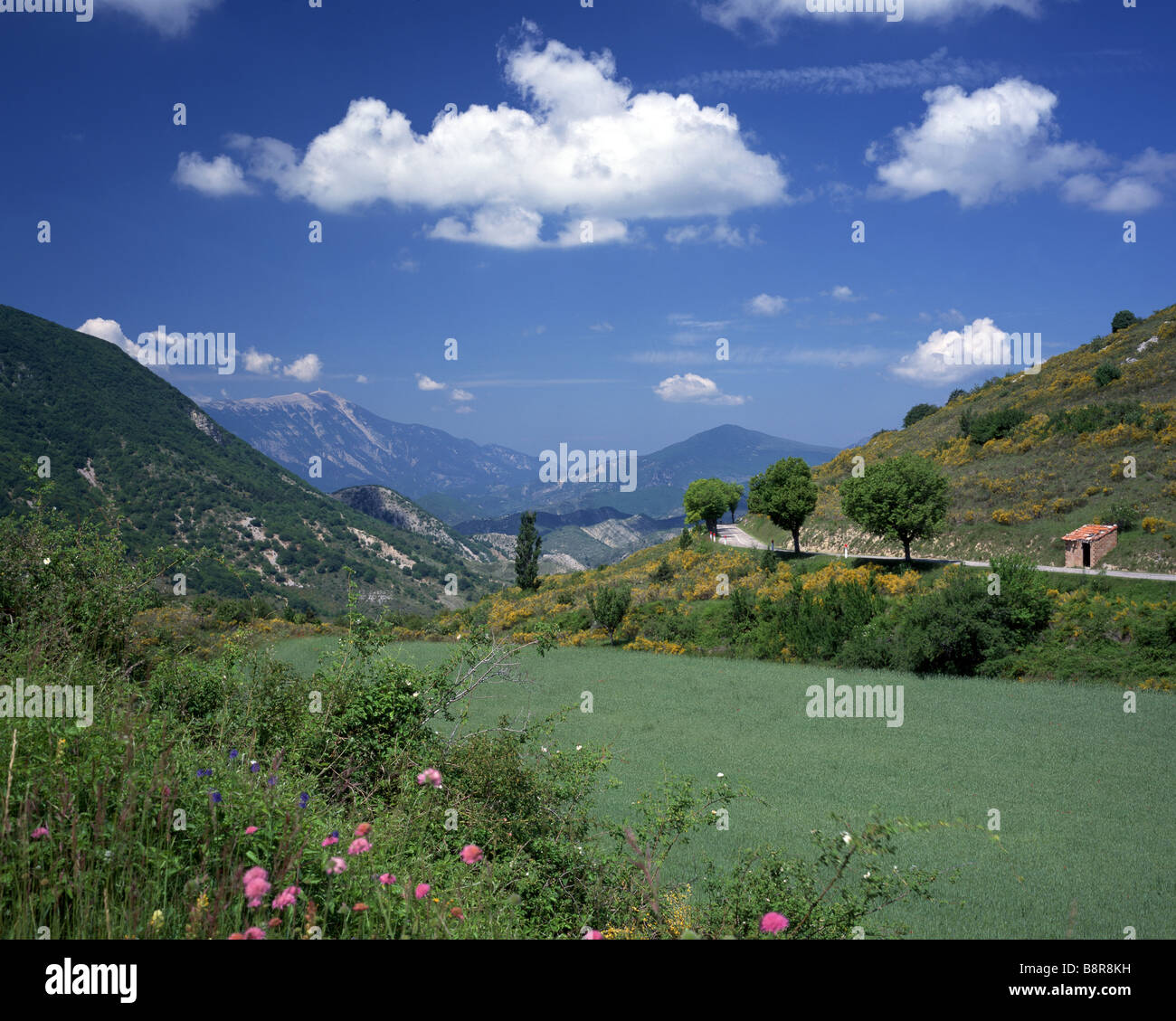 summerly mountanin scenery at the Mont Ventoux, France, Provence - Stock Image