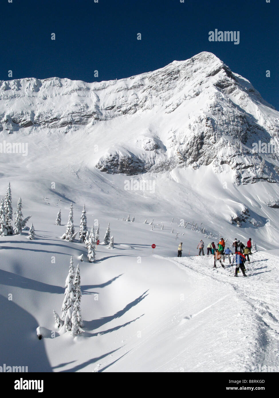 Shot of fresh snow and pines in mountain range in Fernie Canada - Stock Image