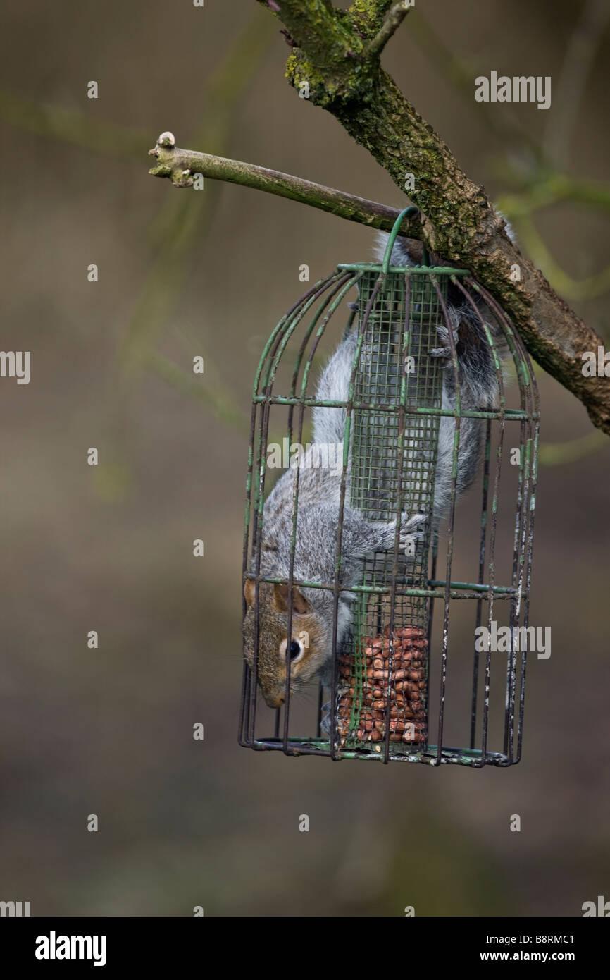 Inside Bird Feeder Stock Photos & Inside Bird Feeder Stock Images ...