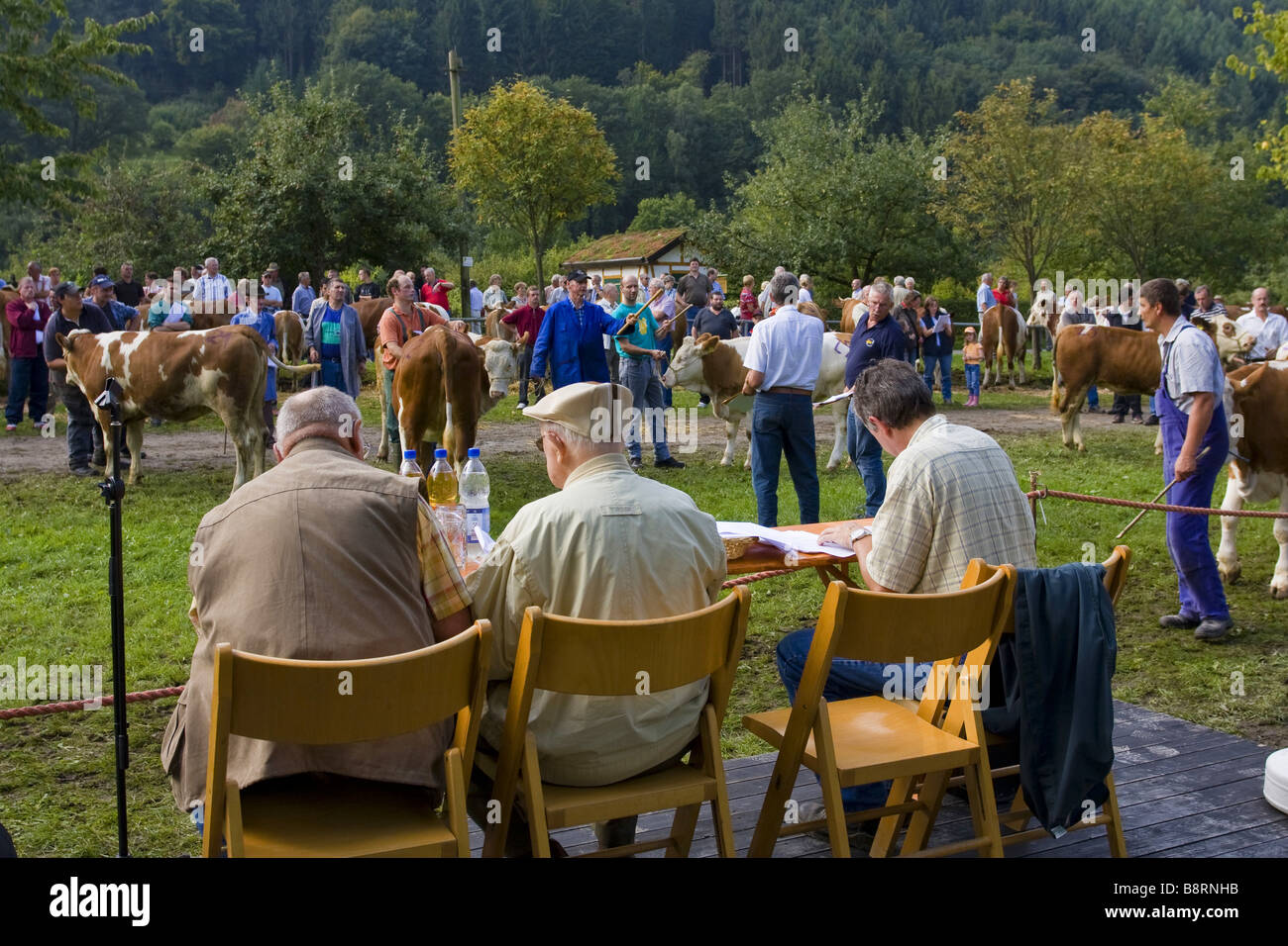 domestic cattle (Bos primigenius f. taurus), cattle vendue at the Kuckucksmarkt, Eberbach, Germany, Baden-Wuerttemberg, - Stock Image