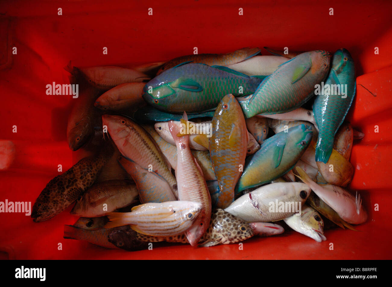 Red box of a variety of fish Semporna wet fish market Semporna Sabah Malaysia Borneo South east Asia - Stock Image