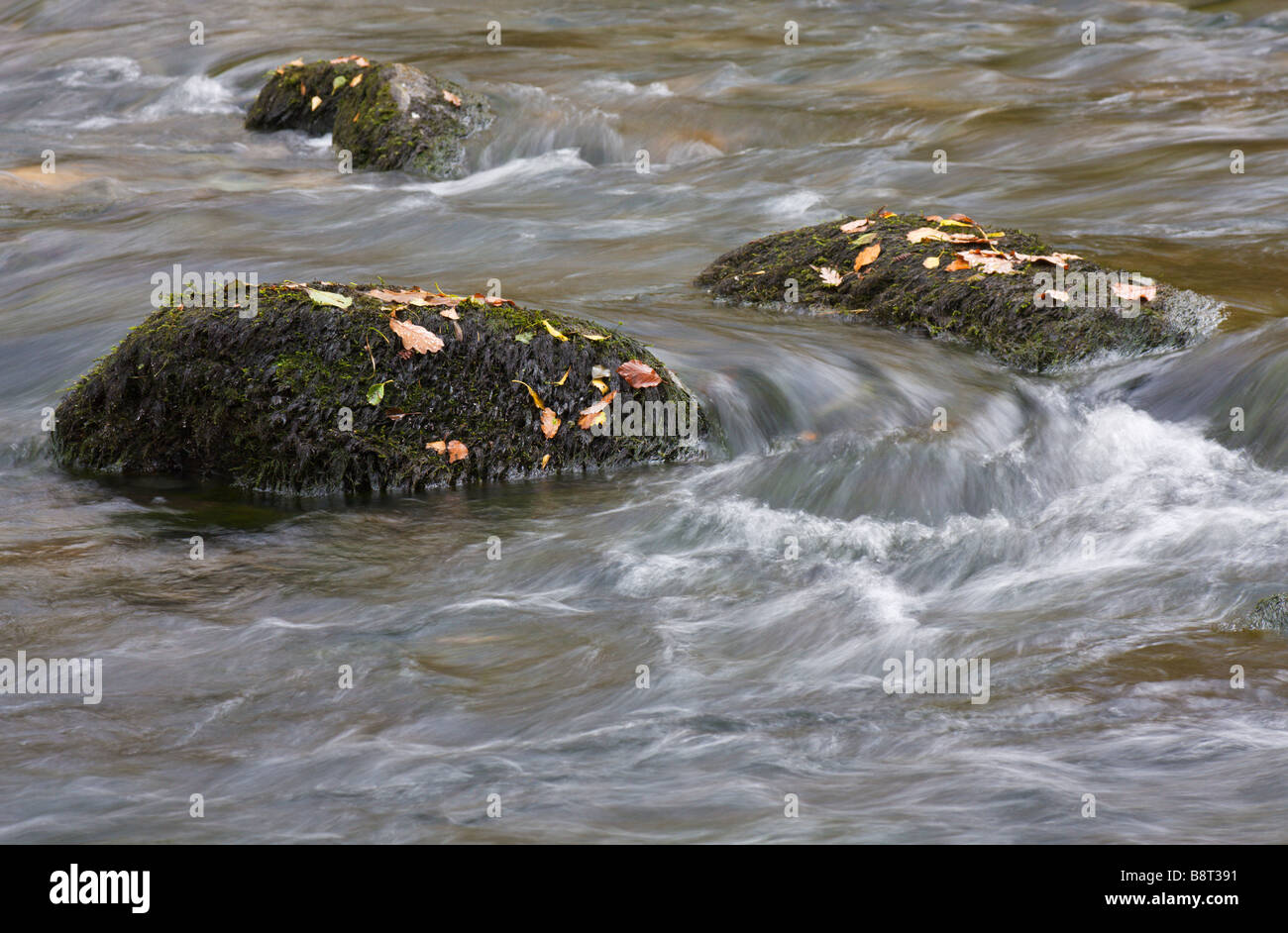 River with mossy boulders moving water and autumn leaves - Stock Image