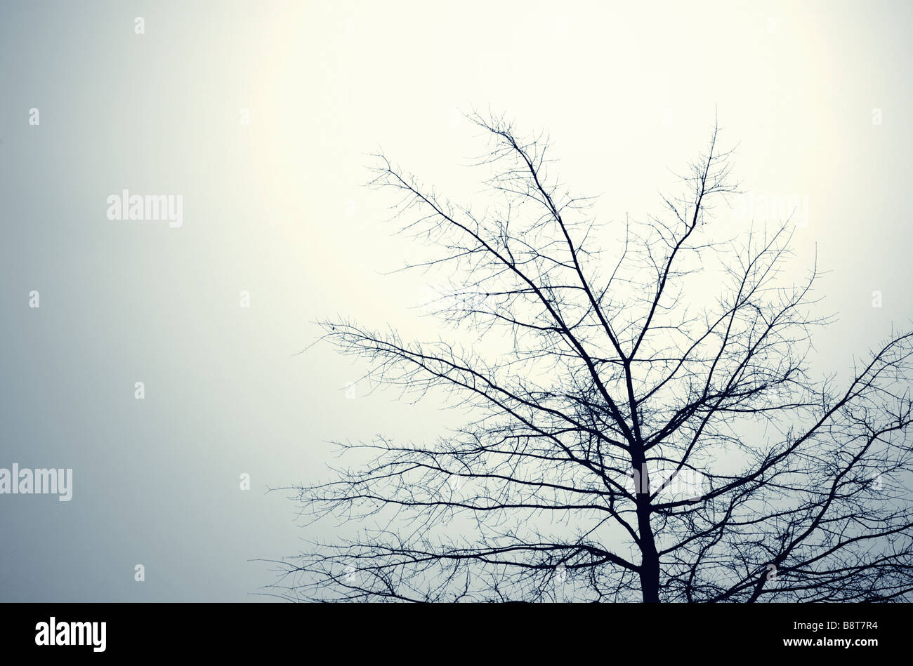 Evocative Image of a Leafless Treetop against an empty sky - Stock Image