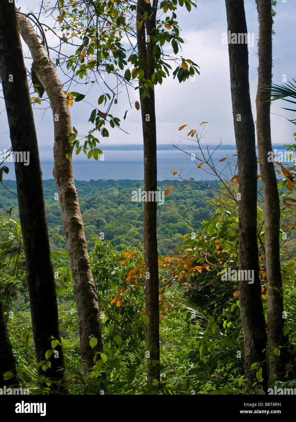 A view at the Tapajos river. Floresta Nacional do Tapajos, near Santarem, Para state, Brazil. Stock Photo