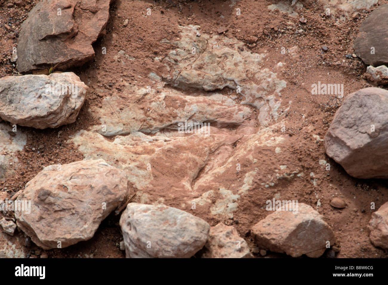 Fossil dinosaur footprint near Tuba City Arizona - Stock Image