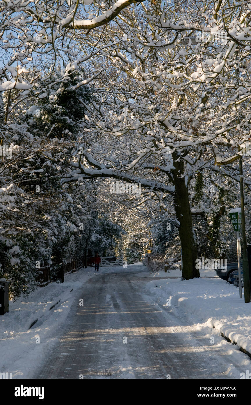 Wintery road with snow-filled trees - Stock Image