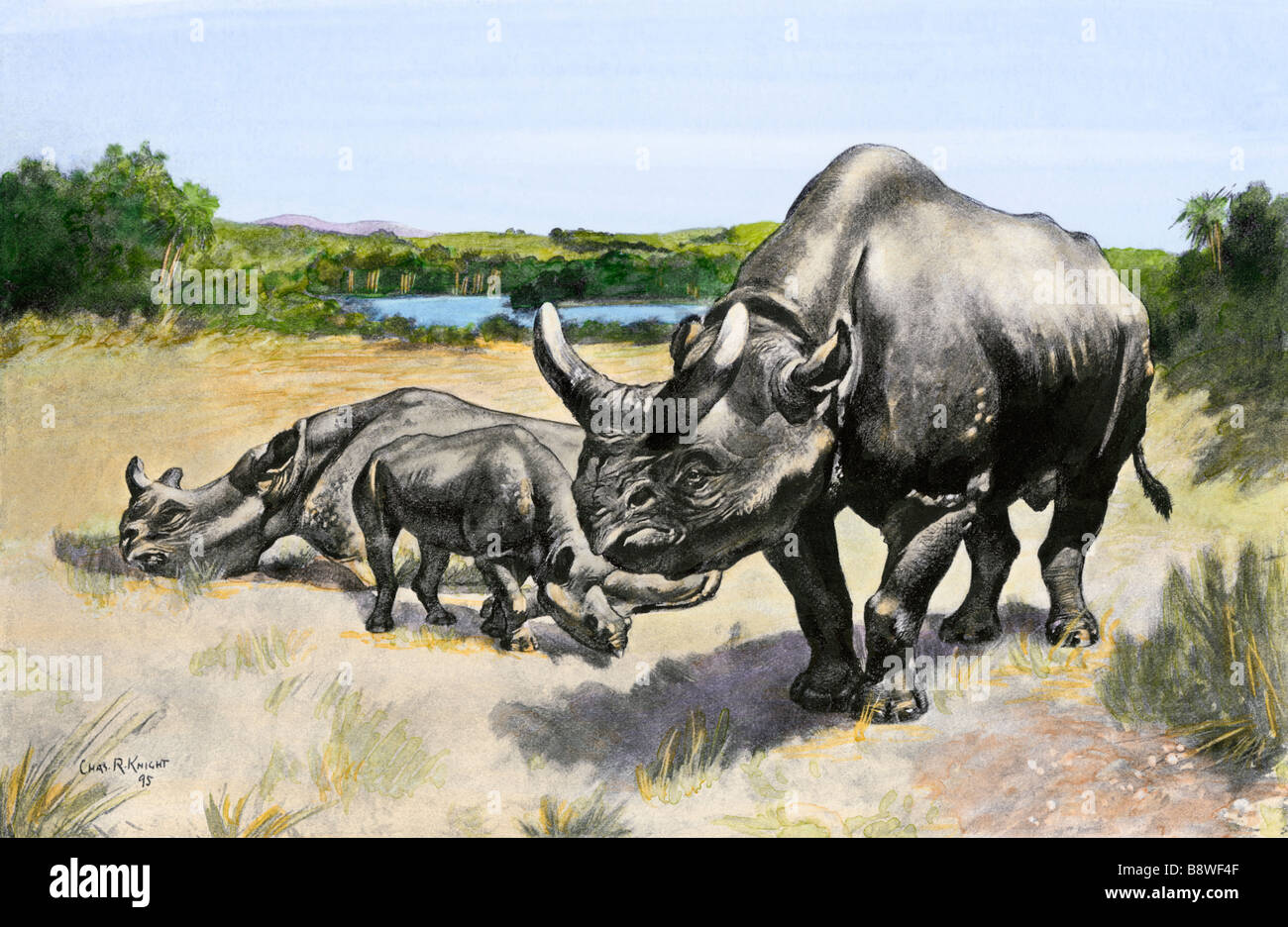 Extinct species of rhinocerus Titanothere, ancient South Dakota. Hand-colored halftone of a Charles Knight illustration - Stock Image