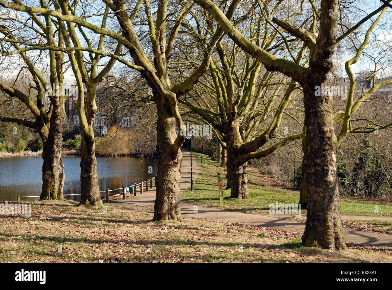 Hampstead Heath pond - Stock Image