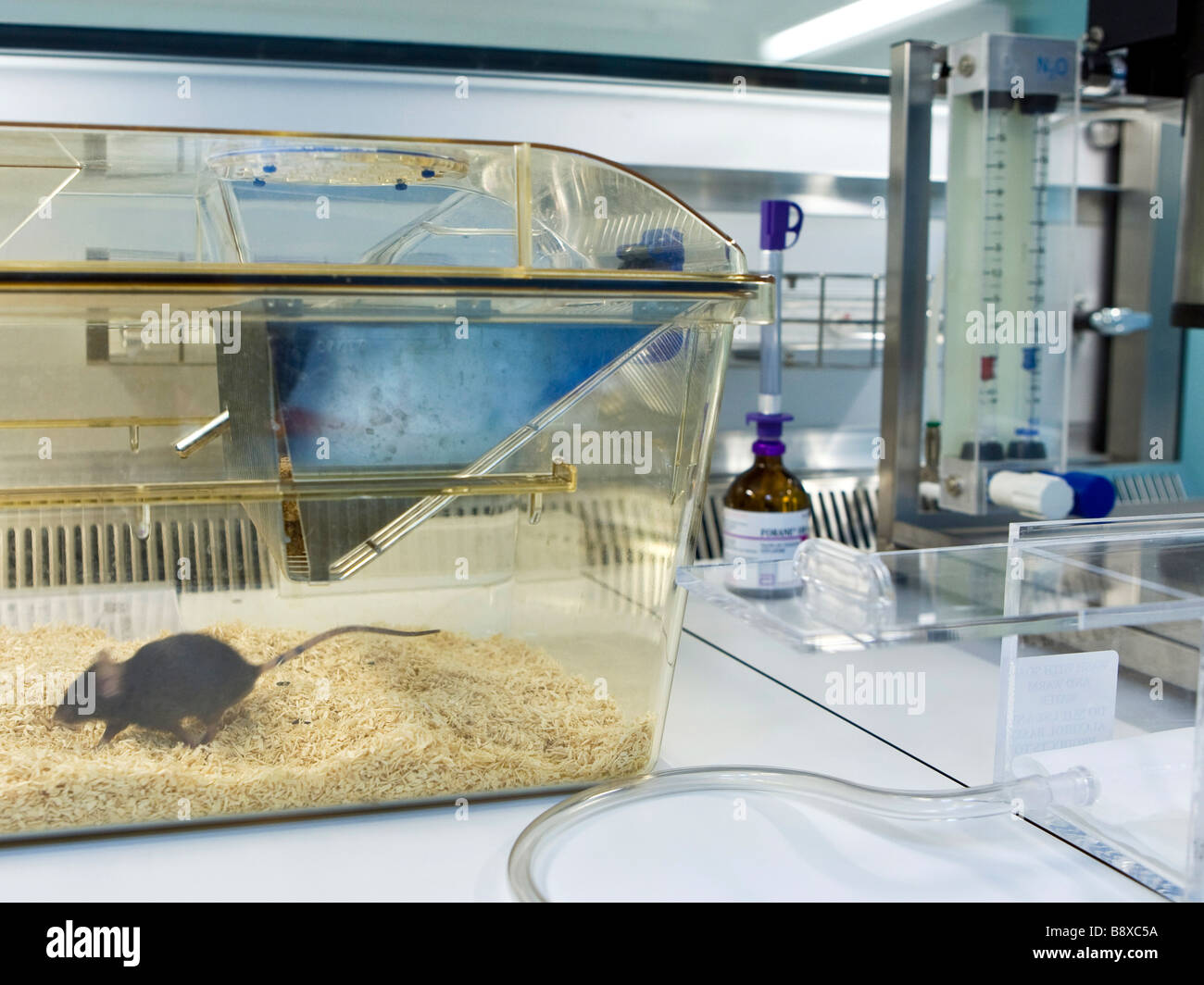 control machinery for animal magnetic resonance, istituto di ricerche farmacologiche mario negri, milan, italy - Stock Image