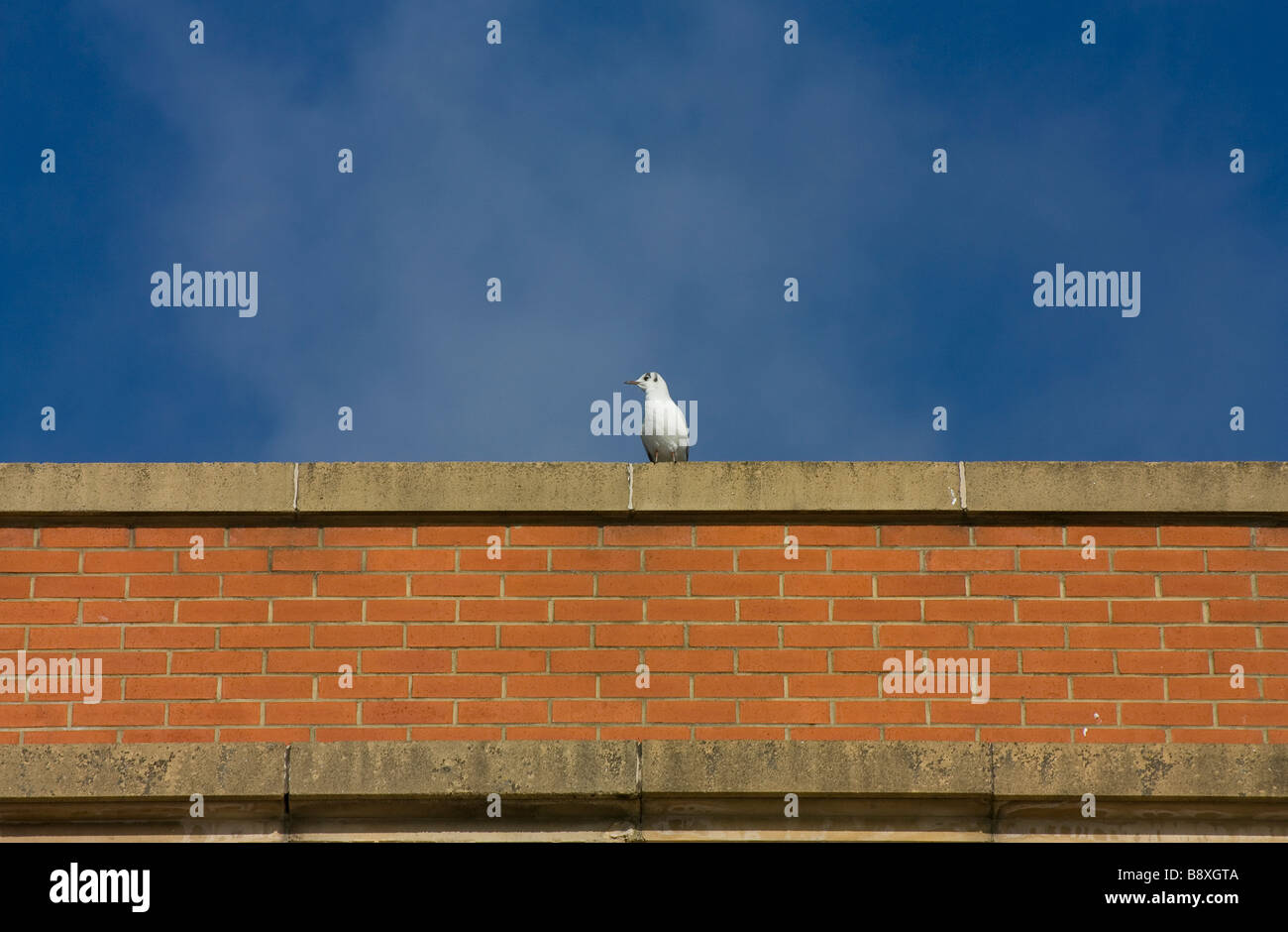 Bird on wall against blue sky - Stock Image