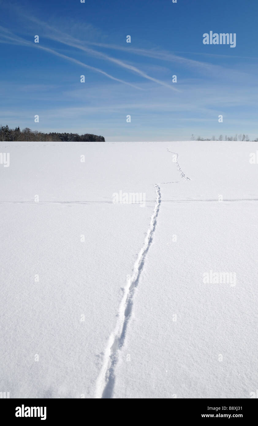 Winter Landscape between Russberg and Risiberg, Naturpark Obere Donau (Upper Danube Nature Park), Heuberg, Swabian - Stock Image