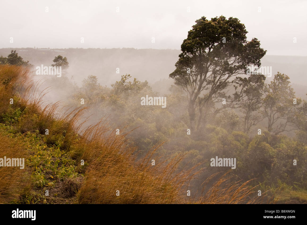 Steaming Vents in Volcanoes National Park, Big Island, Hawaii, USA - Stock Image