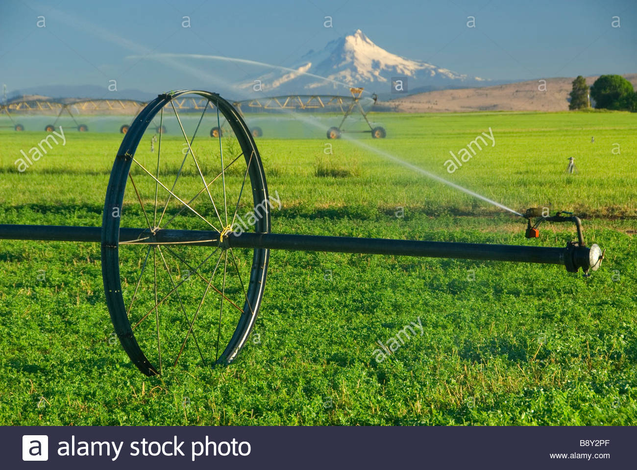 Agricultural sprinkler in a field, Jefferson County, Oregon, USA - Stock Image