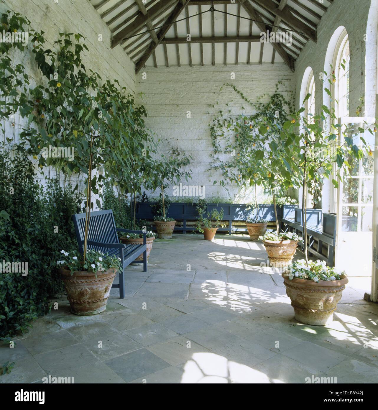 Interior Of Orangery At Dunham Massey With Abutilon Cynthia Pike