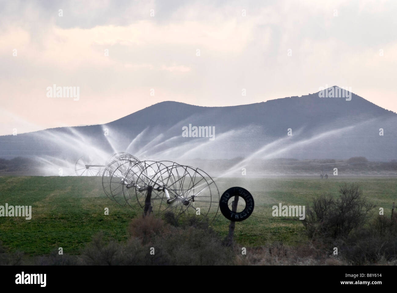 Agricultural sprinklers watering in a field, Nevada, USA - Stock Image