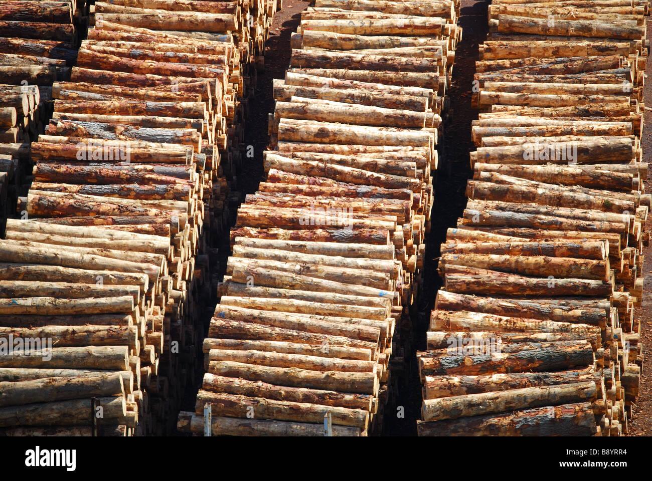 Logs stacked for shipping, Lyttelton, Lyttelton Harbour, Bank's Peninsula, Canterbury, South Island, New Zealand - Stock Image