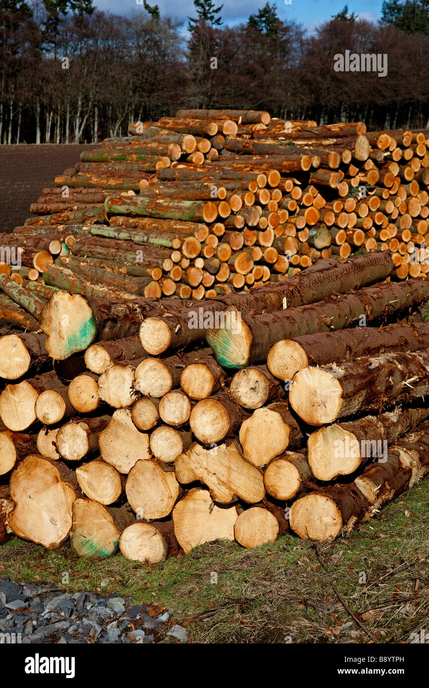 Piles of conifer timber logs, Perthshire, Scotland, UK, Europe - Stock Image