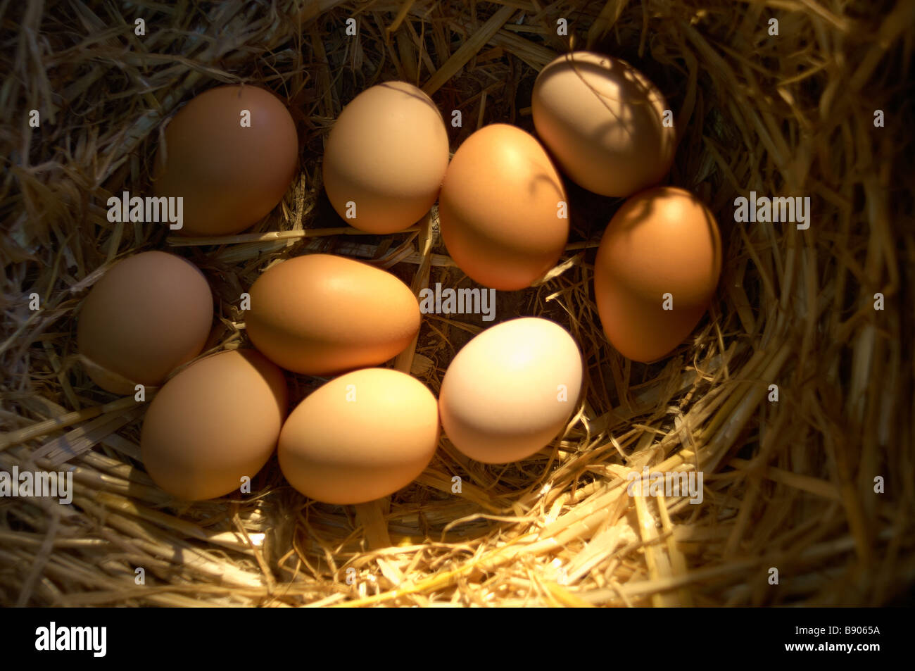 Free range eggs - Stock Image