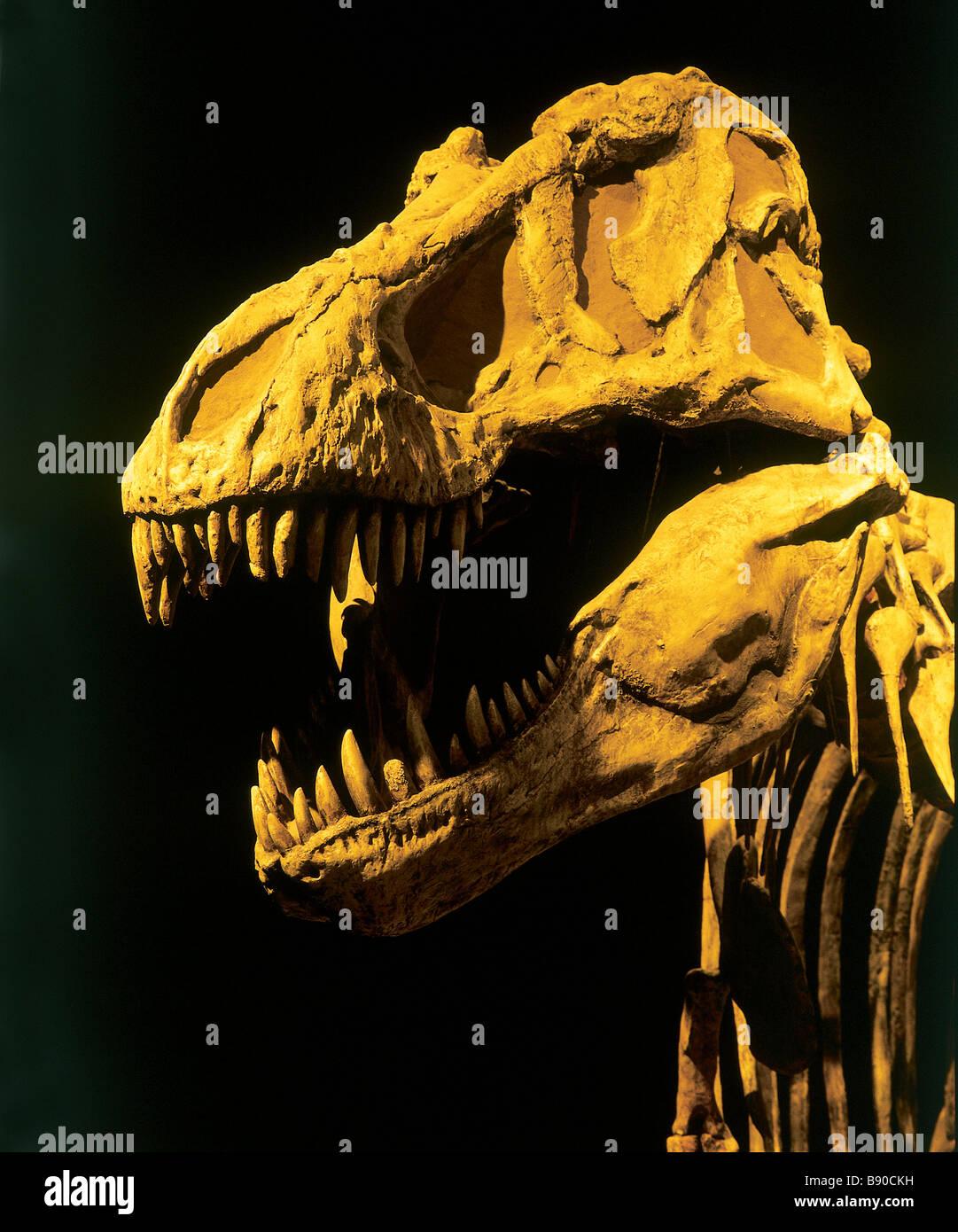 FL1164, D Wiggett; Dinosaur Skeleton - Stock Image