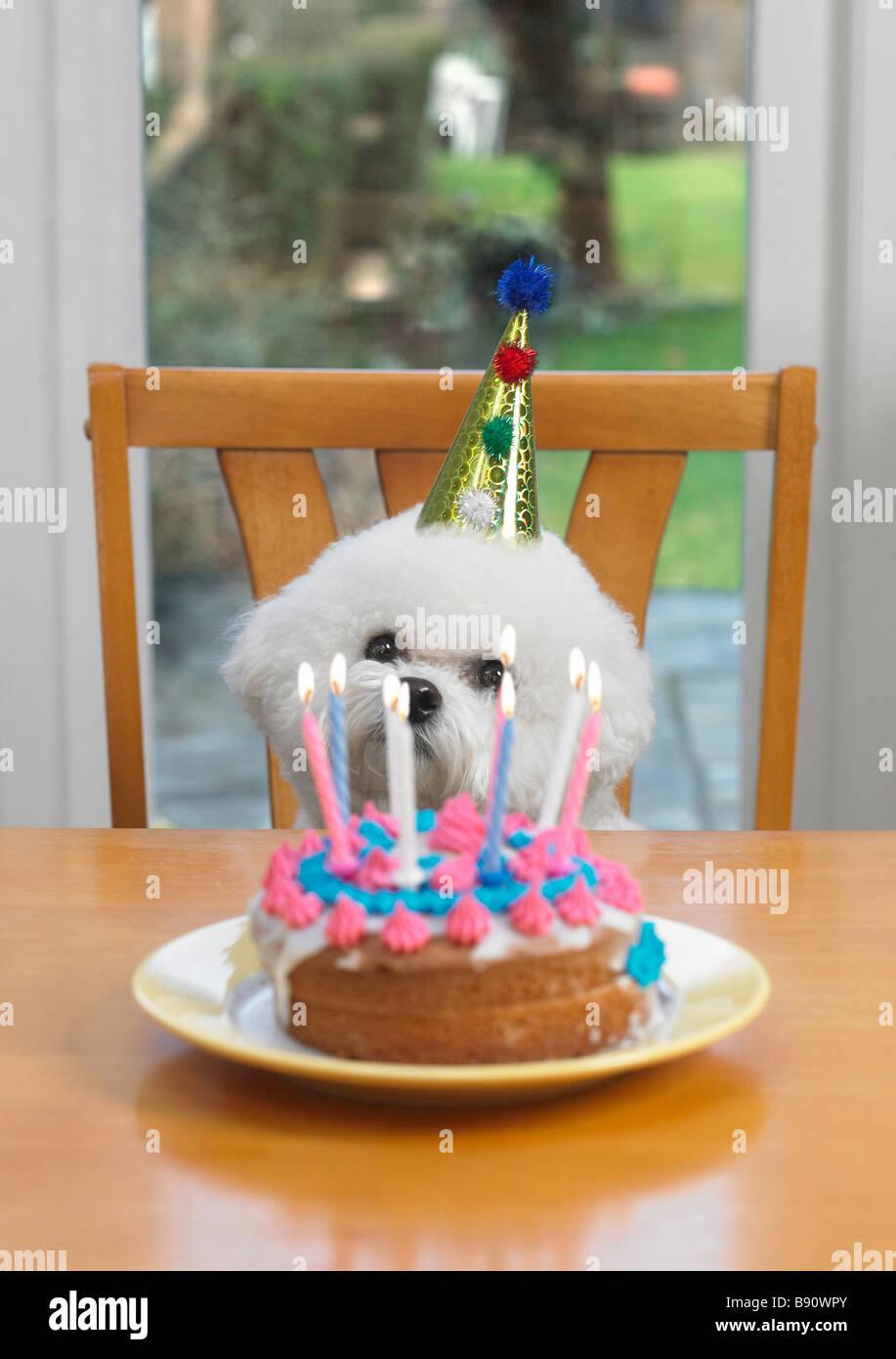 Outstanding Dog With Birthday Cake Stock Photo 22762515 Alamy Personalised Birthday Cards Akebfashionlily Jamesorg